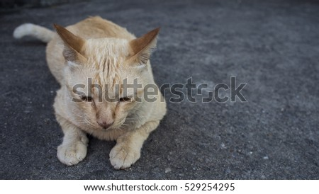 Cat on cement