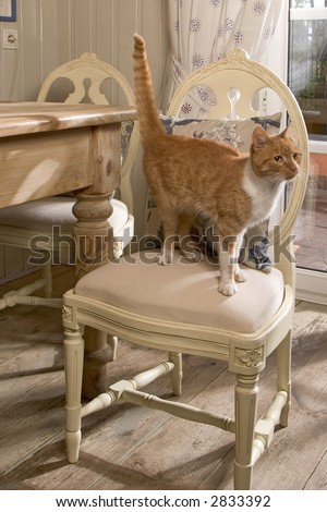 cat on chair