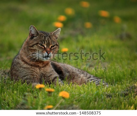 Cat on dandelion field