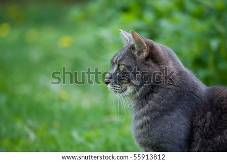 cat on green grass watching carefully for birds to kill