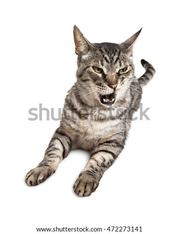 Cat on laying on white with mouth open and funny expression