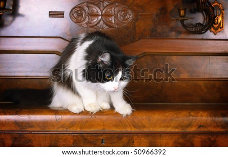 cat on old piano - stock photo