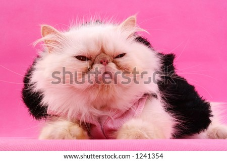 cat on pink - stock photo