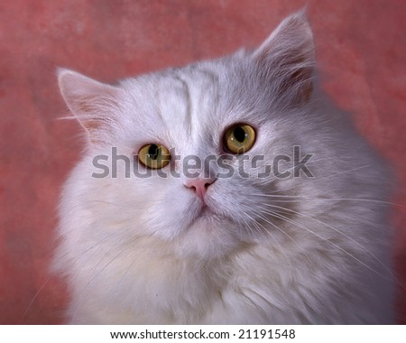 cat on pink background