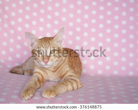 cat on pink background for Valentine theme by pink vintage tone for picture - stock photo