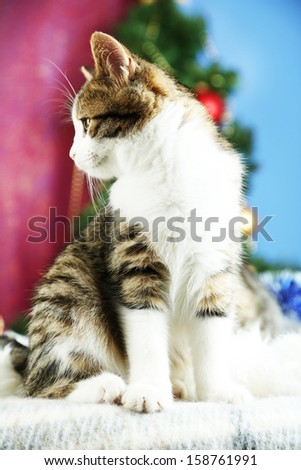 Cat on plaid on Christmas tree background - stock photo