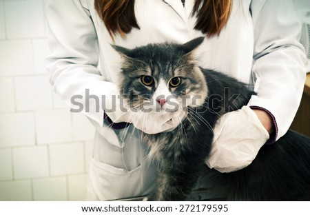 Cat on reception at the vet - stock photo