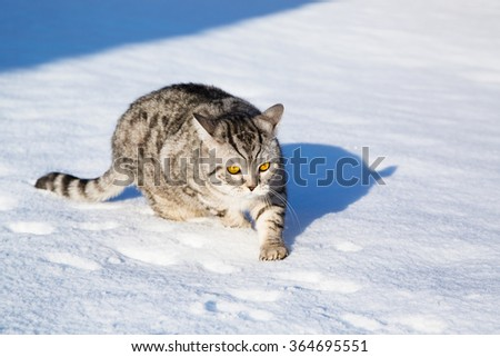 Cat on snow, winter - stock photo