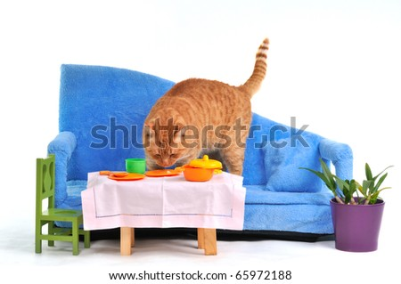 Cat on sofa grabbing food from table - stock photo