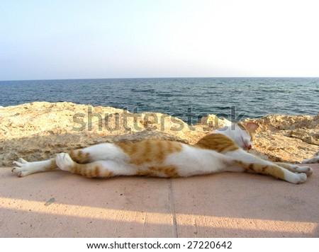 Cat on the beach, Cyprus - stock photo