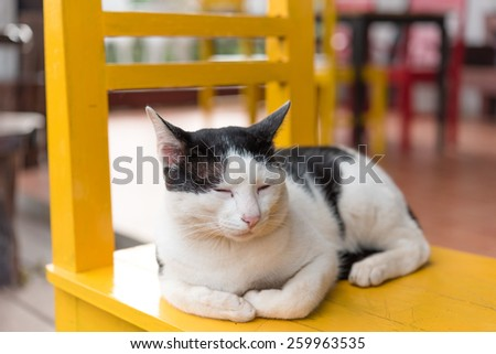 Cat on the chair. - stock photo