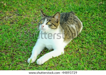 Cat On The Field - stock photo