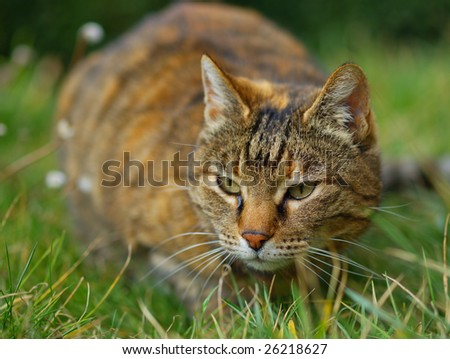 cat on the grass close up