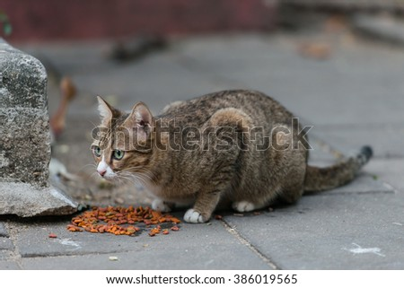 Cat on the ground in park / stray cat - stock photo