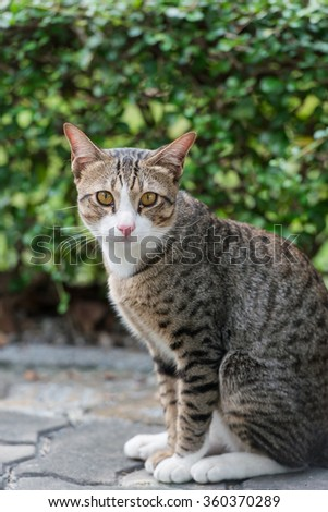Cat on the ground near green bush in the park / stray cat