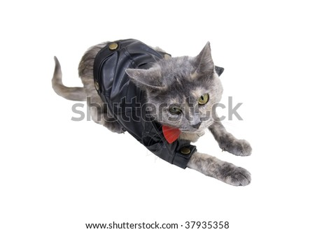 Cat on the prowl wearing a black leather coat that goes with every outfit - path included - stock photo
