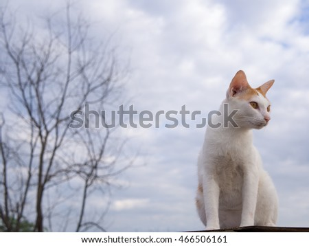 cat on the roof,sky background,cat looking
