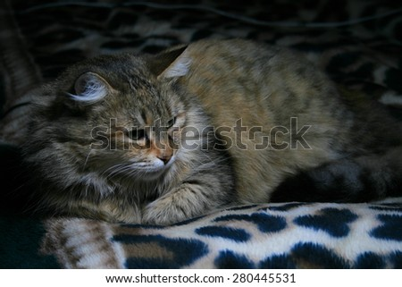 Cat on the sofa. - stock photo