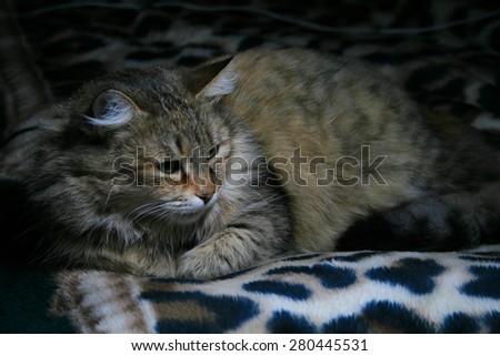 Cat on the sofa. - stock photo