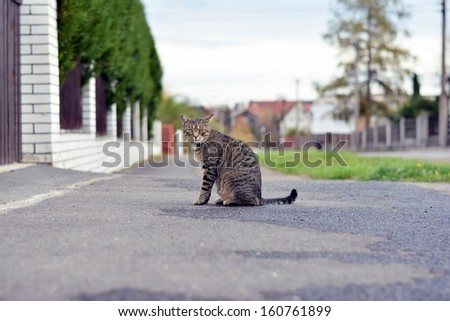 Cat on the street - stock photo