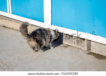 Angry Dog Barking Enraged Dog Home Stock Photo 376623397