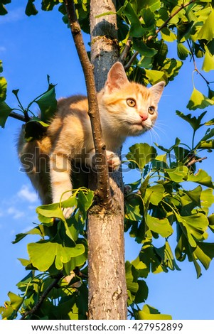 Cat on the tree ginkgo at home garden with the sky as background - stock photo