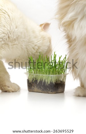 cat on the white background - stock photo