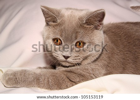 Cat on the white bed - stock photo