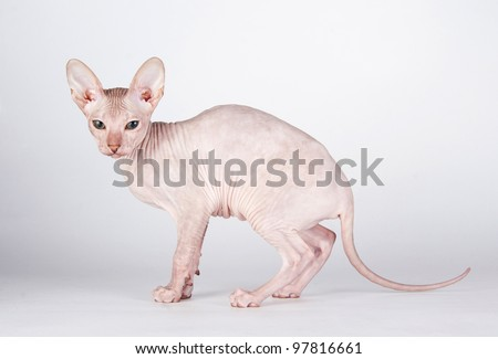 Cat on the white isolated background - stock photo
