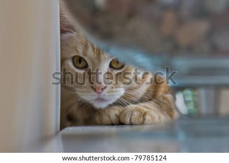 Cat on the windowsill - stock photo