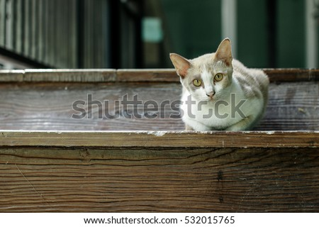 Cat on the wooden pair of stairs.