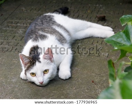 Cat on tombstone - stock photo