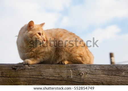 cat on top of a log against blue sky