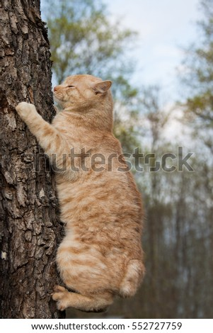 cat on top of a log in forest