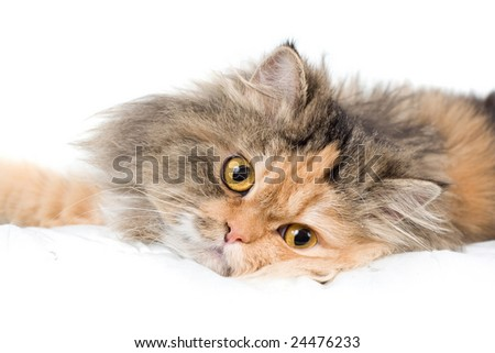 Cat on white background. isolated