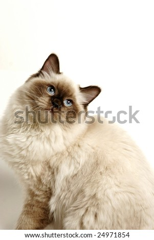 Cat on white background with soft shadow - stock photo