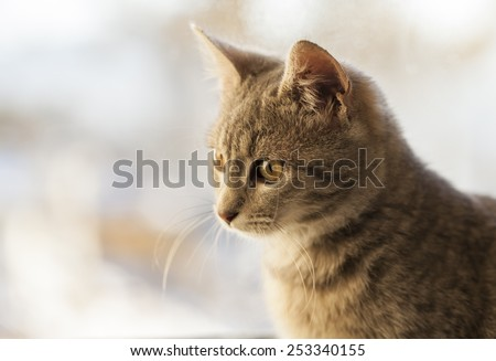 cat on window looking down - stock photo