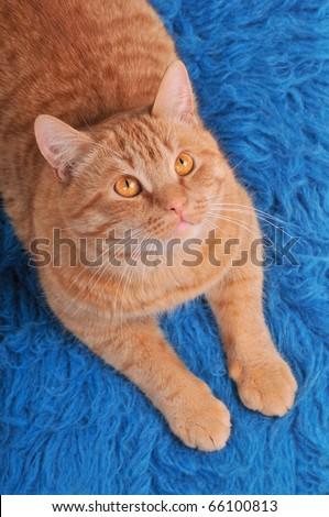 Cat on Woolen Carpet Looking above - stock photo