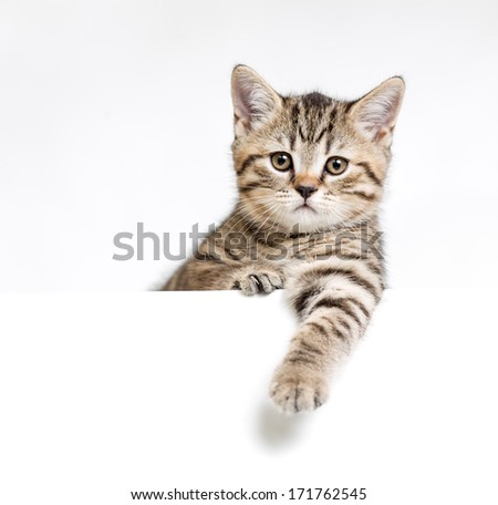 Cat or kitten isolated behind white signboard - stock photo