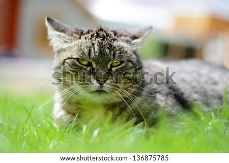 Cat - outdoor - stock photo