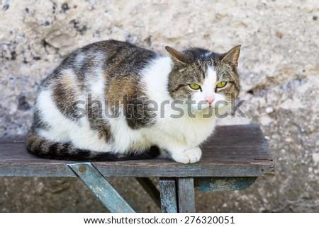 Cat outdoor portrait. Domestic cat photographed in outdoor light. - stock photo