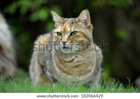 cat outdoor sitting on grass