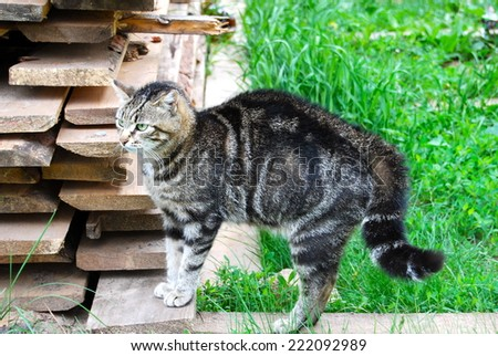Cat outdoors - stock photo
