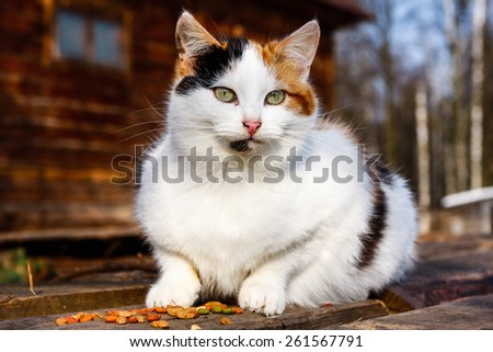Cat outdoors eating - stock photo