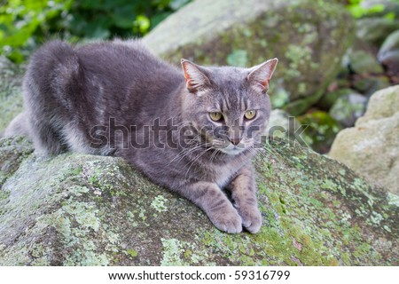 cat outside on rock - stock photo