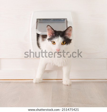 Cat passing through the cat door at home - stock photo
