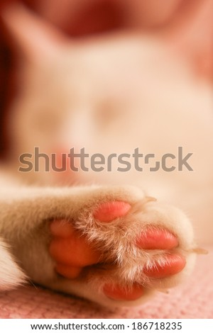 Cat paw details - stock photo