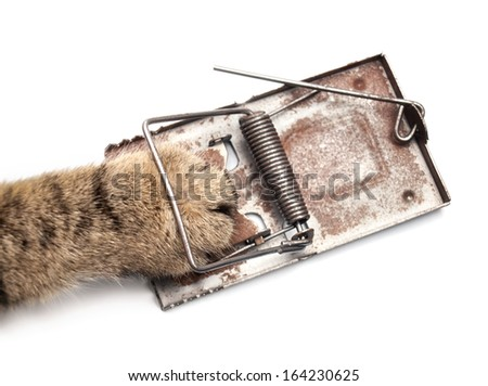 Cat paw in the mousetrap on a white background. - stock photo