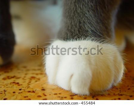 Cat paw, macro - stock photo