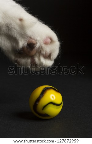 Cat Paw Marble - stock photo
